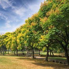 126 Best The Spring Garden Images In 2020 Garden Spring