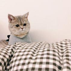 童話の挿絵みたい! #catcatcat