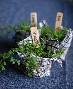 These tiny moss plants are adorable and would make great eco wedding favors or take home gifts. Fun fabric would make them perfect for kids birthday party favors too. #Ecofriendly
