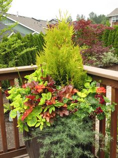 Conifers can form the backbone of year round containers. Here 'Forever Goldie' arborvitae inspires a chartreuse and orange color scheme, partnering with 'Peach Flambe' coral bells and assorted annuals for a striking summer display. Photo and design credit; Le jardinet.