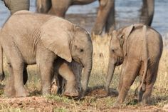 Is China Taking Zimbabwe's Baby Elephants? | TakePart