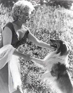 Marilyn Monroe & Lassie in 1952 The dog is an actress too