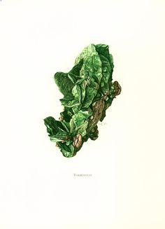 Torbernite radioactive mineral