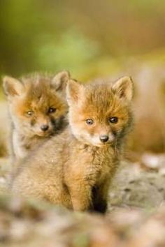 These Foxy Little Babies - Getty Images