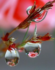 Flowers reflected in dew drops