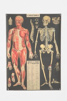 L'Anatomie Poster  #UrbanOutfitters    Bathroom re-do..thinking about adding this.