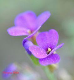 Blomster Vegetables, Flowers, Plants, Vegetable Recipes, Plant, Royal Icing Flowers, Flower, Florals, Veggies