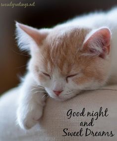 Good Day Quotes: Good night and sweet dreams - Quotes Sayings Good Night Love You, Good Night Cat, Good Night Funny, Good Night Prayer, Good Night Friends, Good Night Blessings, Good Night Wishes, Good Night Sweet Dreams, Good Night Images Hd