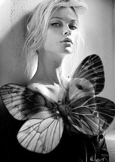 B= Butterfly