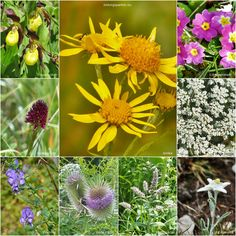 Solche kleinen und besonderen Schätze finden sich im Umfeld unseres Outdoorstützpunktes  #Outdoorpädagogik #Natur #Flora
