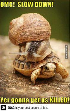Schildkröte Schnecke