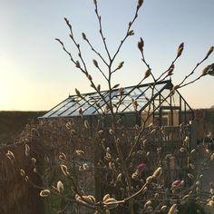 Tæt på en stjernestund med stjernemagnolien 🌞🤗😍 #juliana_drivhuse #drivhusliv #parksdriverhus #forår Utility Pole, Park, Spring, Inspiration, Biblical Inspiration, Parks, Inspirational, Inhalation