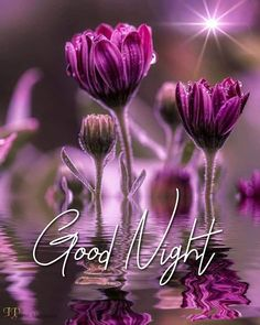 Good Night Thoughts, Good Night Love Quotes, Good Night Love Images, Good Night Wishes, Good Night Sweet Dreams, Good Night Moon, Good Night Image, Good Morning Good Night, Good Morning Images