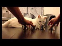 gato adivinador
