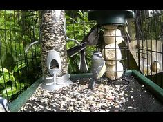 Dog Crate Feeding Station Success – www.wildlifekate.co.uk Ground Bird Feeder, Caged Bird Feeders, Bird Feeding Station, Homemade Bird Feeders, Outdoor Ideas, Backyard Ideas, Outdoor Decor, Dog Crate, Squirrels