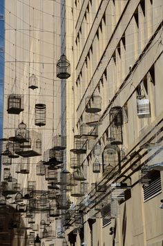 A canopy of empty bird cages hang above the street making graphic shapes and shadows against blue Sydney skies. This permanent public art installation plays a soundscape of birdsong. The calls, tweets and twittering are from bird species that used to live in this area, before the city replaced their native habitats. The installation is known as 'Forgotten Songs' and is part of the Laneways: By George Hidden Networks project.