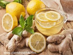 I will give our valuable readers detailed and scientific explanations about the benefits of Ginger Tea. Ginger tea,which is consumed intensively Health Benefits Of Ginger, Tea Benefits, Kefir Benefits, Tea For Digestion, Homemade Ginger Ale, Ginger Lemonade, La Constipation, Kefir Recipes, How To Relieve Headaches