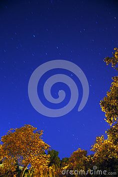 Startrails With Trees by Allegresse, via Dreamstime
