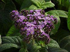 Gardening Articles :: Flowers :: Perennials :: National Gardening Association http://www.garden.org/subchannels/flowers/perennials?q=show&id=74&page=1