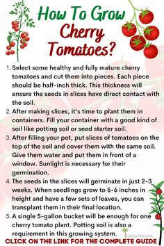 How To Grow Cherry Tomatoes From Slices | Slick Garden. Growing Cherry Tomatoes, Grow Tomatoes, Canning Tomatoes, Organic Mulch, Organic Compost, How To Grow Cherries, Watering Tomatoes, Cherry Tomato Plant, Sun Loving Plants