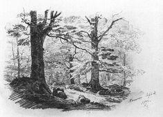 Forest Scene at Ramsau