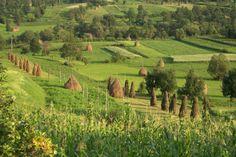 Maramureşul este un loc iubit de toţi cei care apreciază natura aşa cum ne-a lăsat-o Dumnezeu. Romania, Montana, Cool Pictures, Vineyard, Landscape, Nice, Recherche Google, Outdoor, Outdoors
