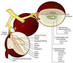 blood of grapes wine - Szukaj w Google