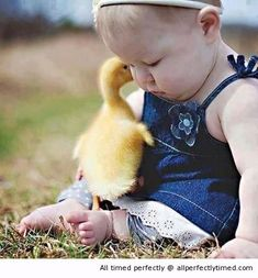 Baby and her duckling friend – The little duckling has a secret for the baby. The secret is don't tell his friends about him.