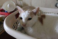 里親さんブログ10歳 - http://iyaiya.jp/cat/archives/77916