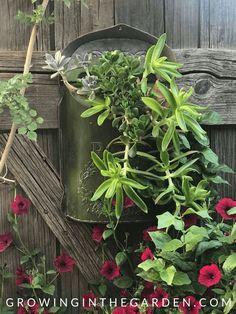 Repurposed Mailbox Succulent Garden Container