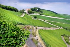 The German Wine Institute has one space remaining for a UK buyer or importer to take part in a trip to the country next month.