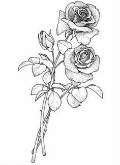rose drawing single flower outline tattoo stencil just free image