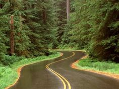 Wet road through the mountain forest HD wallpaper Olympic National Forest, National Parks, Rainy Day Wallpaper, Forest Mountain, Forest Road, Forest Wallpaper, Winding Road, Washington State, Ghana