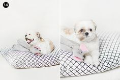 DIY No-Sew Dog Bed // Easy DIY Gifts for Your Dog