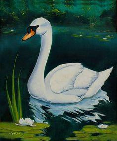 swan paintings | Swan Painting - Swan Fine Art Print
