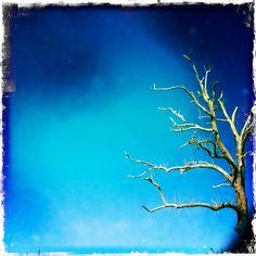 Stripped bare..... Tree after Joplin tornado