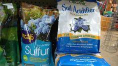 Want blue hydrangeas? Organic Soil, Organic Gardening, Blue Hydrangea, Hydrangeas, Aluminium Sulfate, Soil Ph, Flowering Shrubs, Blueberry, Flowering Bushes