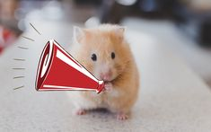 Hamsters may be bite-sized but, thanks to their upkeep demands, they are more than a handful. Taking care of the little furballs is almost a full-time job sometimes. Doing everything correctly might not even be enough though, and a myriad of strange things can pop up seemingly out of nowhere. #hamsters #hamster #hamsterlove #hamsterlife #hamsterlover Hamster Life, Strange Things, Hamsters, Weird, Pop, Animals, Popular, Animales, Pop Music