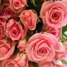 Roses Ca Garden  Spray Odelia $5/spray
