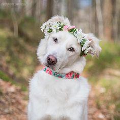 "707 Likes, 56 Comments - ↠ M I L L I E  &  L U N A ↞ (@milliethemix_lunathelab) on Instagram: ""SPRING 2017 ✌ ✔️ weekend ✔️ flower crown ✔️ flower collar ✔️ head tilt  . We're celebrating…"""