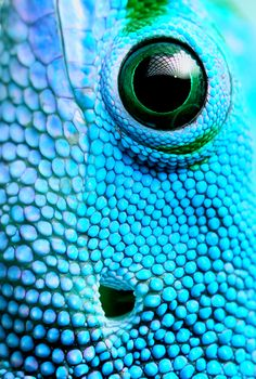 This creature is serious about bright blue.  #devinecolor