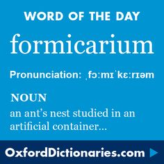 formicarium (noun): An ant's nest, especially one in an artificial container for purposes of study. Word of the Day for 24 March 2016. #WOTD #WordoftheDay #formicarium