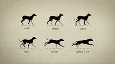 Animal Gaits for Animators on Vimeo