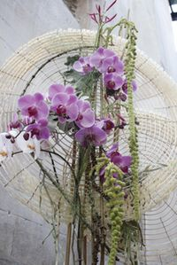 Beautiful Orchids from my favorite magazine Fusion Flowers