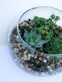How To: Succulent Terrarium...