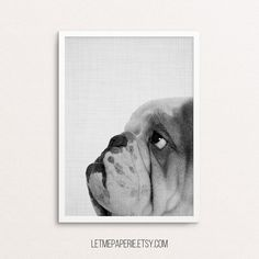 Dog Print Bulldog photography Dog Photo Nursery by LetMePaperie
