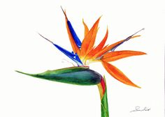 http://images.fineartamerica.com/images-medium-large-5/2-strelitzia-reginae-sue-sill.jpg