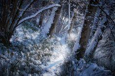Cold Walk by hipydeus, via Flickr