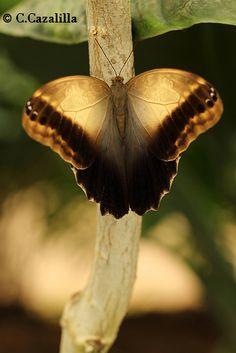 Hola de nuevo, despues de un descanso y ya que parece que el verano se marcho, voy a ver si me pongo las pilas y aprieto más el boton, bueno os dejo con esta imagen, a ver que os parece estas alas doradas en saludo para tot@s.