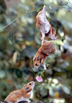 """""""A vida pode ficar muito pequena quando olhamos para ela com o olhar estreito. O tédio acontece quando nos afastamos da capacidade de nos encantarmos com as coisas mais simples do mundo..."""""""